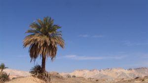 Egyiptom kép 012